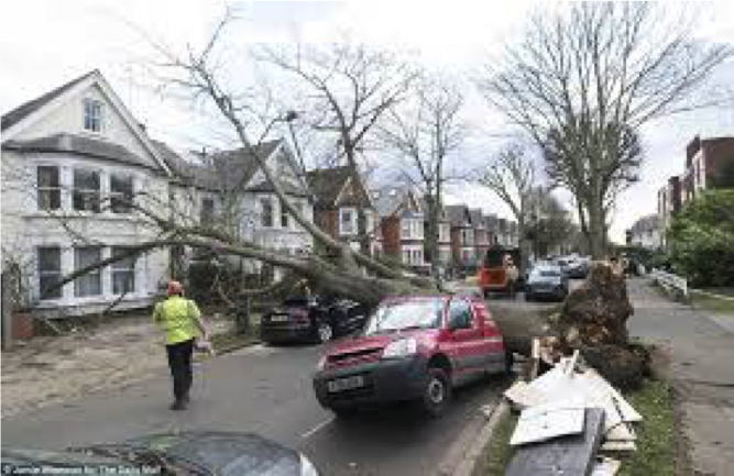 Wind blown tree damage